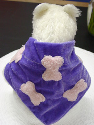 Pet Clothing Indoors